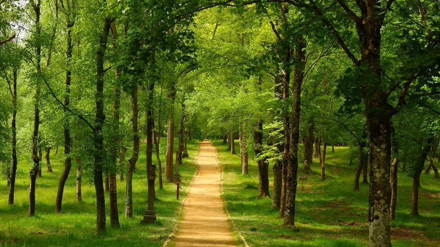 Дивовижна краса природи - частина 14  159885298