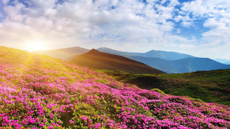 Шпалери Гарних квітів в природі частина 1 Природа, Квіти, Сонце id1125207222