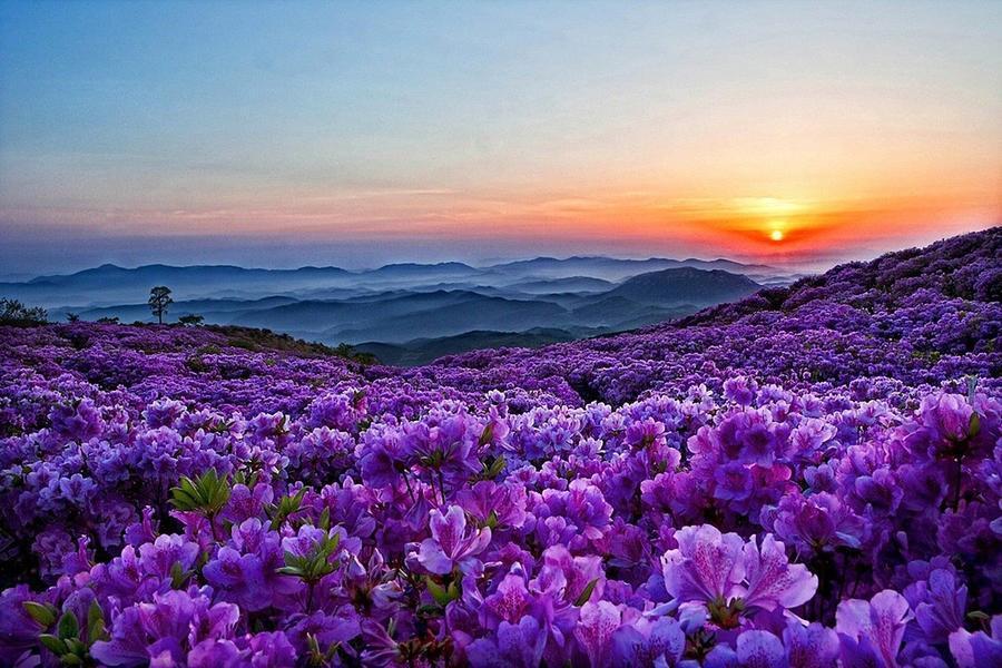 Шпалери Гарних квітів в природі частина 1 Природа, Квіти, Сонце id2064171776