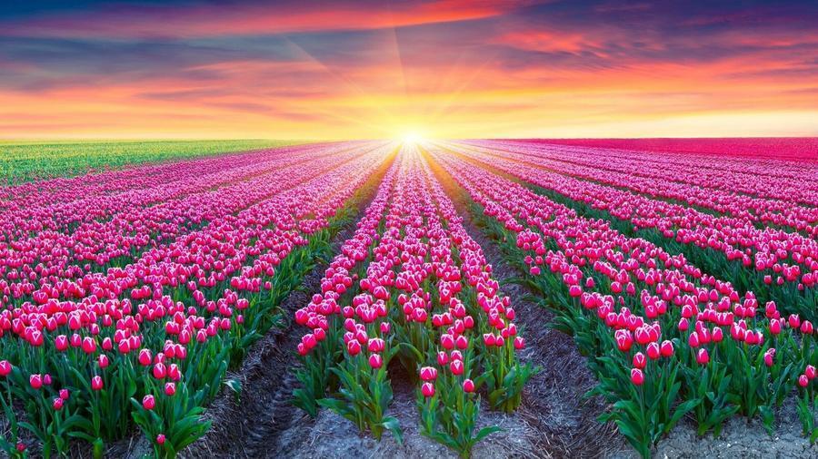 Шпалери Гарних квітів в природі частина 1 Природа, Квіти, Сонце id2036343996