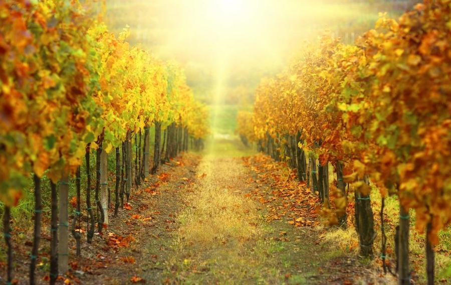 Шпалери - Прованс  - частина 2 Романтична зустріч, Франція, Прованс, Цікаві місця для побачень, Пам'ятки id574851458