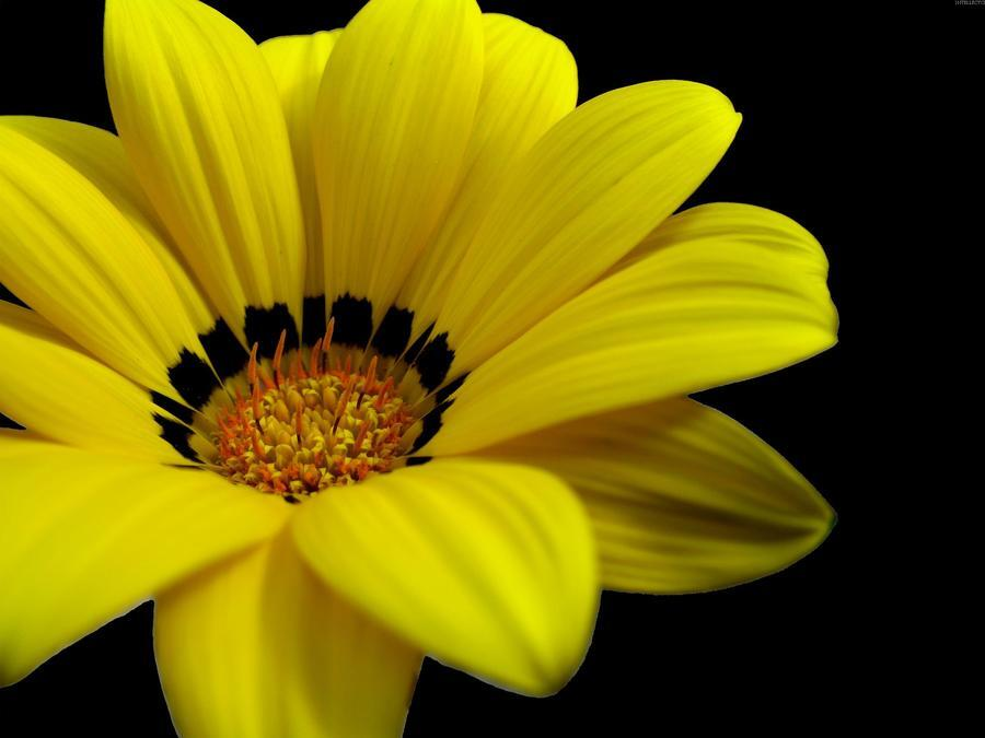 Дивовижна краса природи - частина 8 Тюльпани, Бузок, Небо, Природа, Квіти, Захід, Схід id945443550