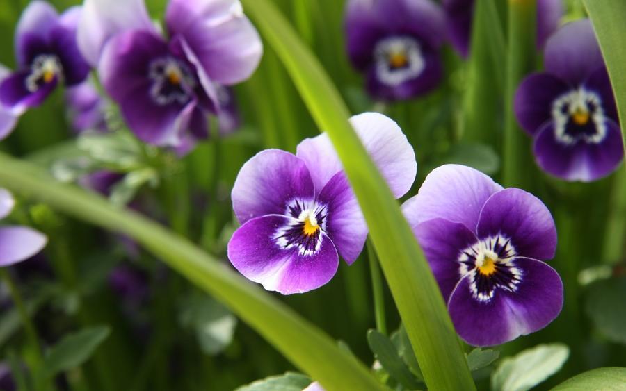 Дивовижна краса природи - частина 8 Тюльпани, Бузок, Небо, Природа, Квіти, Захід, Схід id604802