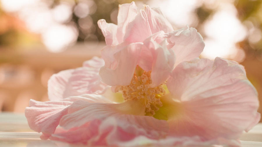 Дивовижна краса природи - частина 8 Тюльпани, Бузок, Небо, Природа, Квіти, Захід, Схід id1965321126