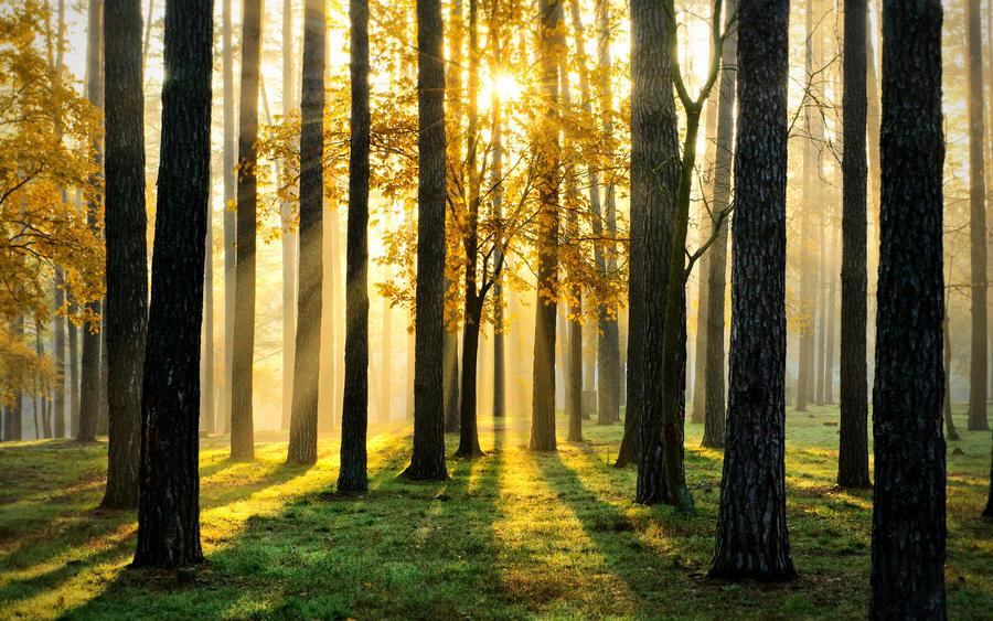 Дивовижна краса природи - частина 10 Небо, Гори, Озеро, Дерева, Ліс, Водоспад, Море, Океан, Схід, Захід id1500732575