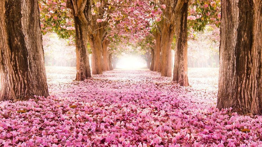 Дивовижна краса природи - частина 12 Пальми, Хвилі, Дерева, Парк, Море, Океан, Схід, Захід, Пісок, Острів id2048480055