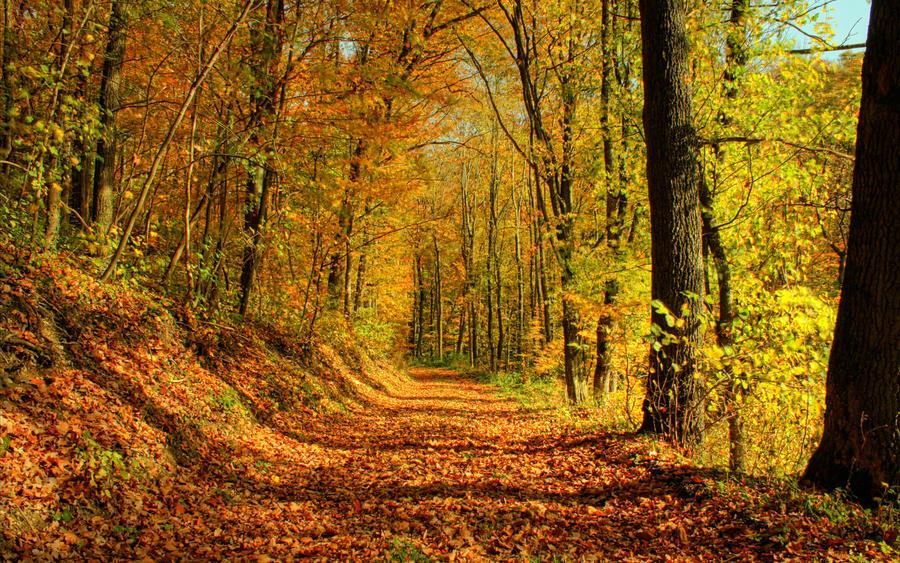 Дивовижна краса природи - частина 12 Пальми, Хвилі, Дерева, Парк, Море, Океан, Схід, Захід, Пісок, Острів id1970948514