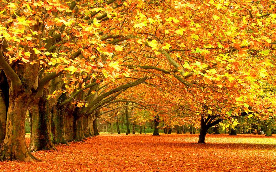 Дивовижна краса природи - частина 12 Пальми, Хвилі, Дерева, Парк, Море, Океан, Схід, Захід, Пісок, Острів id1349833975