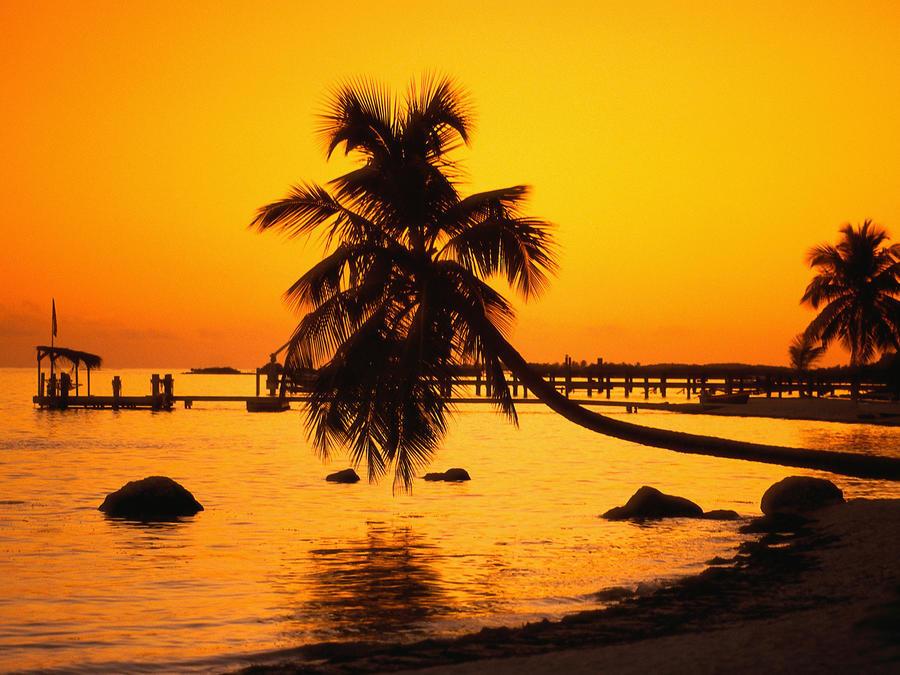 Дивовижна краса природи - частина 17 Пальми, Хвилі, Дерева, Парк, Море, Океан, Схід, Захід, Острів, Вода id147655985