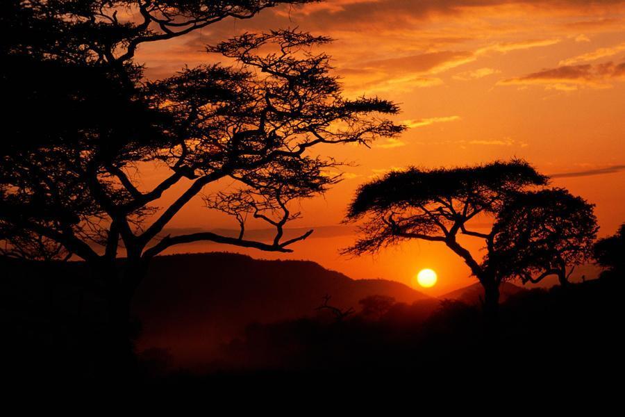 Дивовижна краса природи - частина 17 Пальми, Хвилі, Дерева, Парк, Море, Океан, Схід, Захід, Острів, Вода id882444844