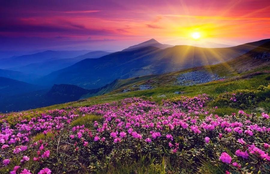 Дивовижна краса природи - частина 17 Пальми, Хвилі, Дерева, Парк, Море, Океан, Схід, Захід, Острів, Вода id583088781
