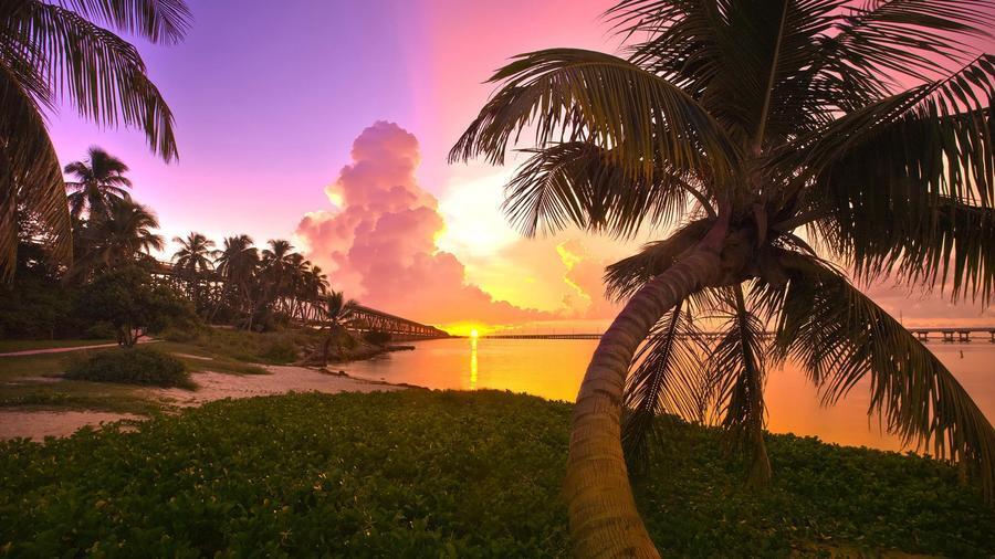 Дивовижна краса природи - частина 17 Пальми, Хвилі, Дерева, Парк, Море, Океан, Схід, Захід, Острів, Вода id327794374