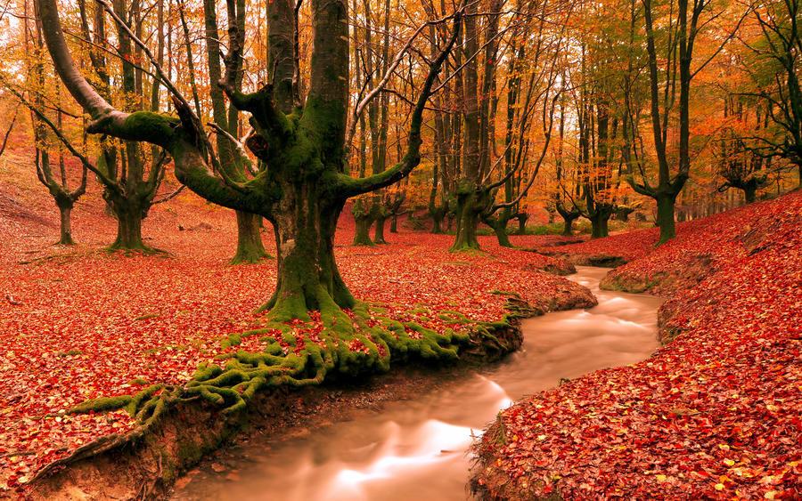 Дивовижна краса природи - частина 17 Пальми, Хвилі, Дерева, Парк, Море, Океан, Схід, Захід, Острів, Вода id236648764