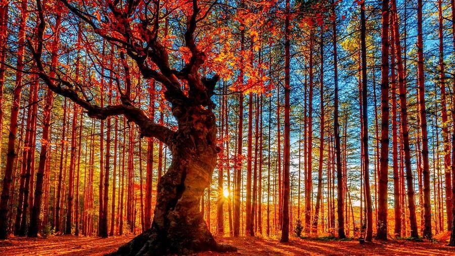 Дивовижна краса природи - частина 17 Пальми, Хвилі, Дерева, Парк, Море, Океан, Схід, Захід, Острів, Вода id1022947050