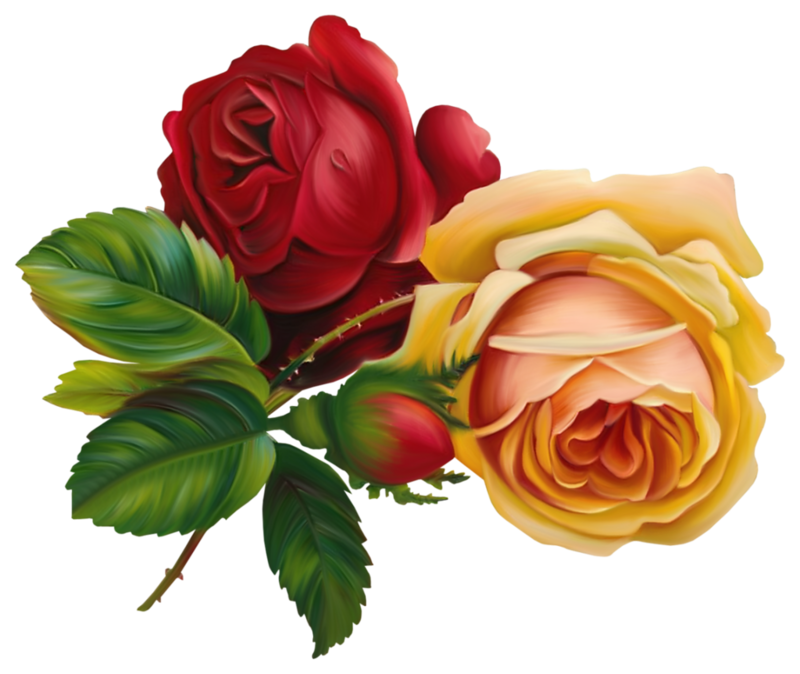Чарівність троянд - частина 3 Ніжність, Краса, Природа, Квіти, Троянди, Білі троянди, Рожеві троянди, Любов / Кохання id881196153