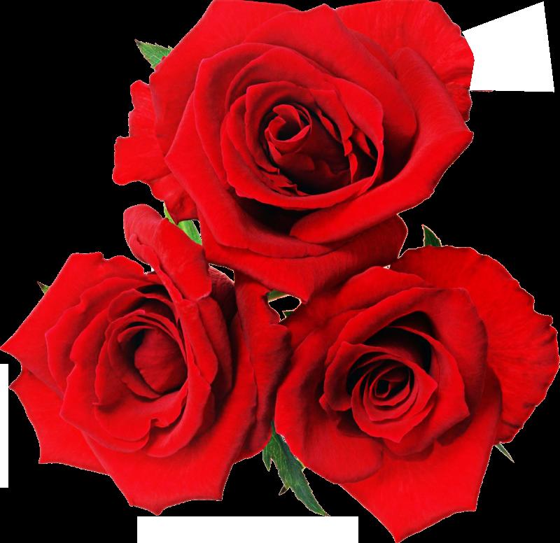 Чарівність троянд - частина 3 Ніжність, Краса, Природа, Квіти, Троянди, Білі троянди, Рожеві троянди, Любов / Кохання id713575169