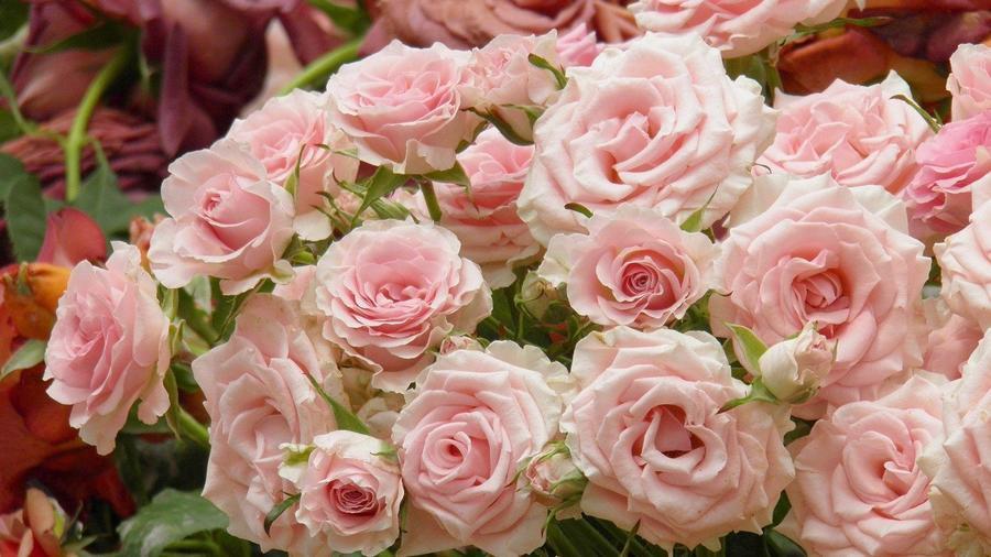 Любов і троянди - частина 3 Ніжність, Небо, Природа, Сад, Кущ, Квіти, Троянди, Любов / Кохання, Схід, Сонце id1232177773