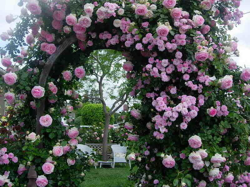 Любов і троянди - частина 4 Ніжність, Небо, Природа, Кущ, Роса, Квіти, Троянди, Любов / Кохання, Схід, Сонце id1699492295