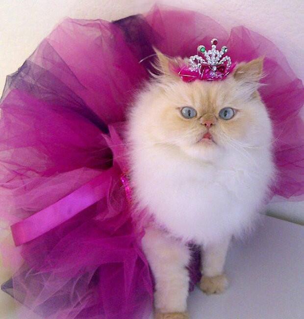 Kittens - Part 5  1506068613