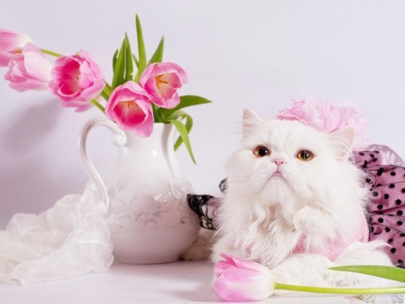 Kittens - Part 5  248075155