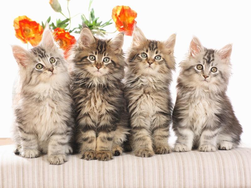 Позитивні емоції - частина 2 Природа, Тварини, Кіт, Кішка, Коти, Любов, Позитив, Емоції, Кошик, Царство Природи id1255086549