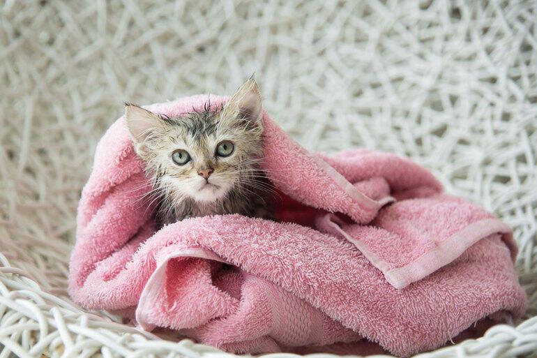 Позитивні емоції - частина 2 Природа, Тварини, Кіт, Кішка, Коти, Любов, Позитив, Емоції, Кошик, Царство Природи id1086056132
