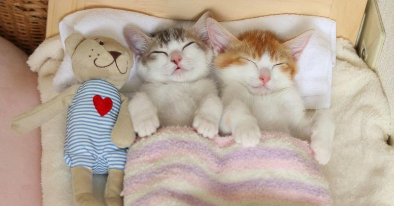 Позитивні емоції - частина 4 Природа, Тварини, Кіт, Кішка, Коти, Любов, Позитив, Емоції, Кошик, Царство Природи id1333232317