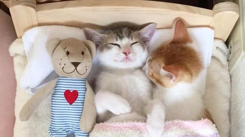 Позитивні емоції - частина 4 Природа, Тварини, Кіт, Кішка, Коти, Любов, Позитив, Емоції, Кошик, Царство Природи id1960599065
