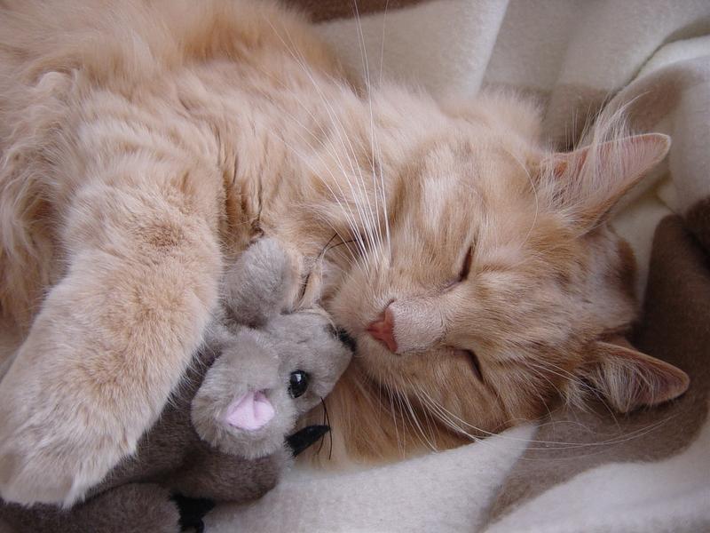 Позитивні емоції - частина 4 Природа, Тварини, Кіт, Кішка, Коти, Любов, Позитив, Емоції, Кошик, Царство Природи id360930795