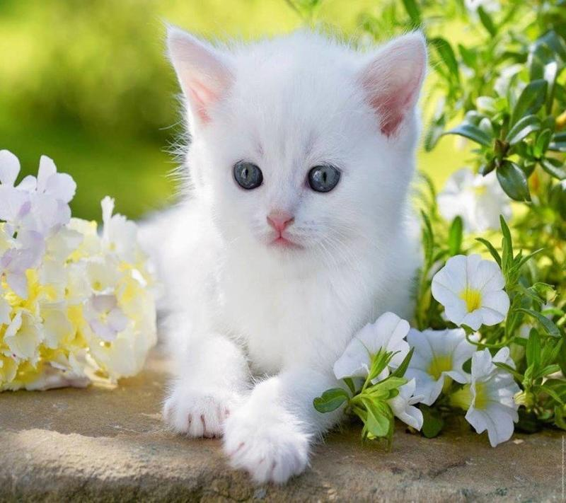 Позитивні емоції - частина 4 Природа, Тварини, Кіт, Кішка, Коти, Любов, Позитив, Емоції, Кошик, Царство Природи id1218276856