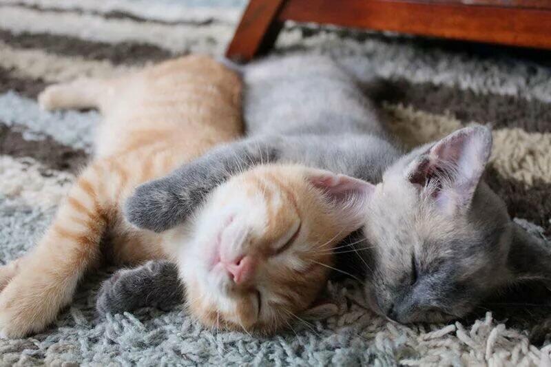 Позитивні емоції - частина 5 Природа, Тварини, Кіт, Кішка, Коти, Любов, Позитив, Емоції, Кошик, Царство Природи id2039811251