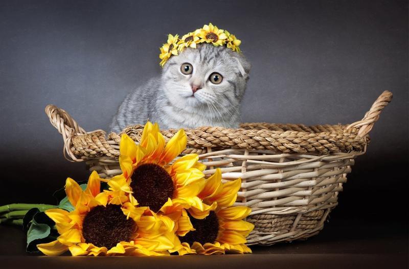 Позитивні емоції - частина 5 Природа, Тварини, Кіт, Кішка, Коти, Любов, Позитив, Емоції, Кошик, Царство Природи id916189264