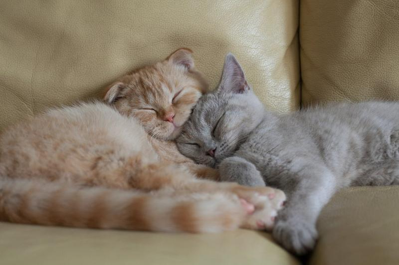 Позитивні емоції - частина 5 Природа, Тварини, Кіт, Кішка, Коти, Любов, Позитив, Емоції, Кошик, Царство Природи id1947015639