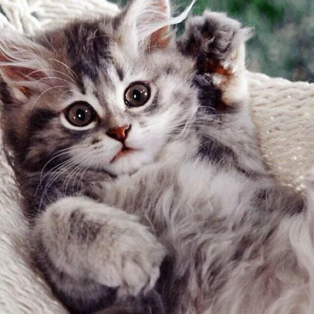 Позитивні емоції - частина 5 Природа, Тварини, Кіт, Кішка, Коти, Любов, Позитив, Емоції, Кошик, Царство Природи id1005726042