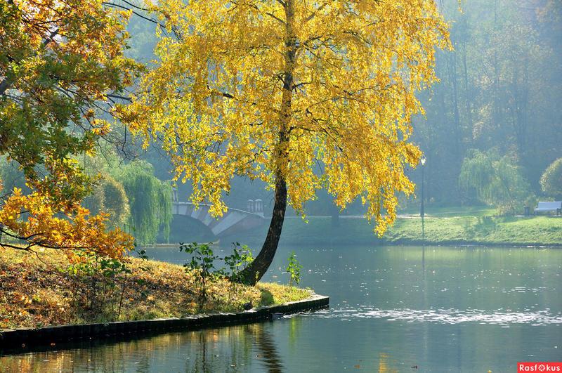 Краса вересня - частина 7 Природа, Осінь, Дерева, Листя, Сонце, Гори, Позитив, Небо, Ліс, Царство Природи id1133714532