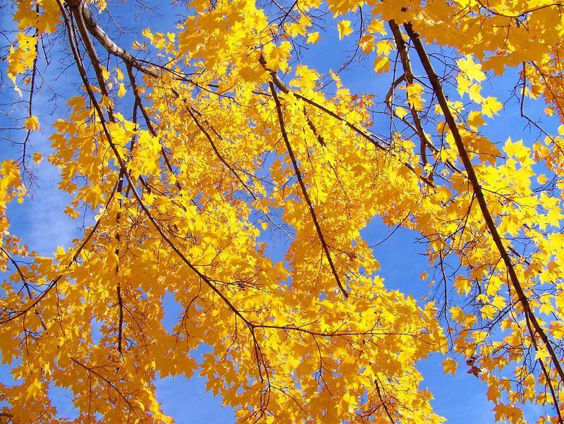 Краса жовтня - частина 6 Природа, Осінь, Жовтень, Дерева, Парк, Схід, Сонце, Вода, Листя, Небо id910653841