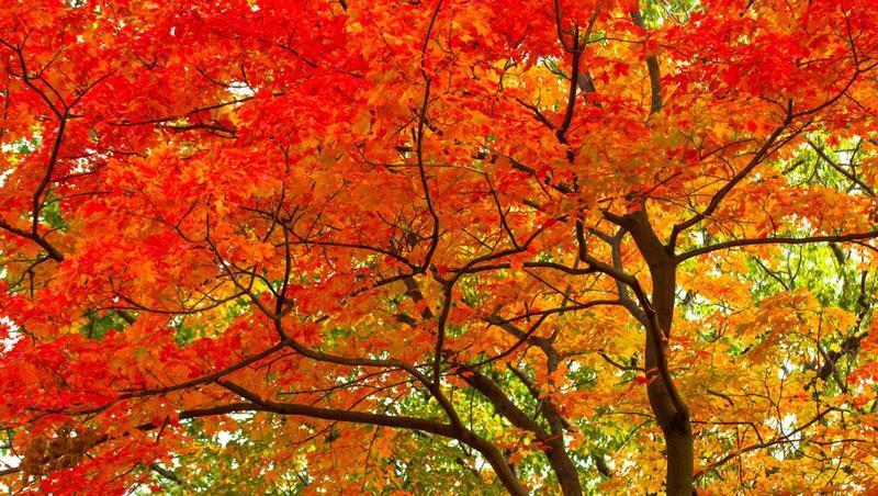 Краса жовтня - частина 6 Природа, Осінь, Жовтень, Дерева, Парк, Схід, Сонце, Вода, Листя, Небо id1435082570
