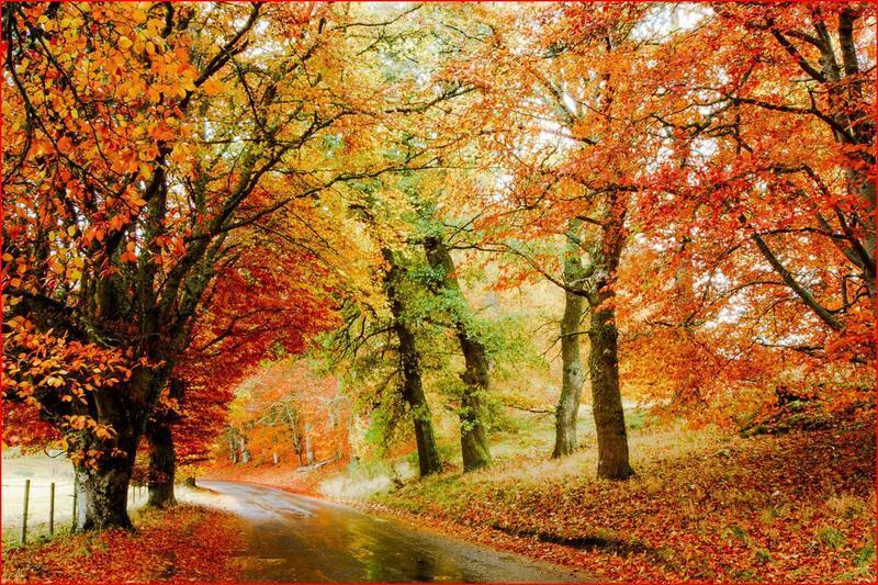 Краса жовтня - частина 6 Природа, Осінь, Жовтень, Дерева, Парк, Схід, Сонце, Вода, Листя, Небо id1452574761