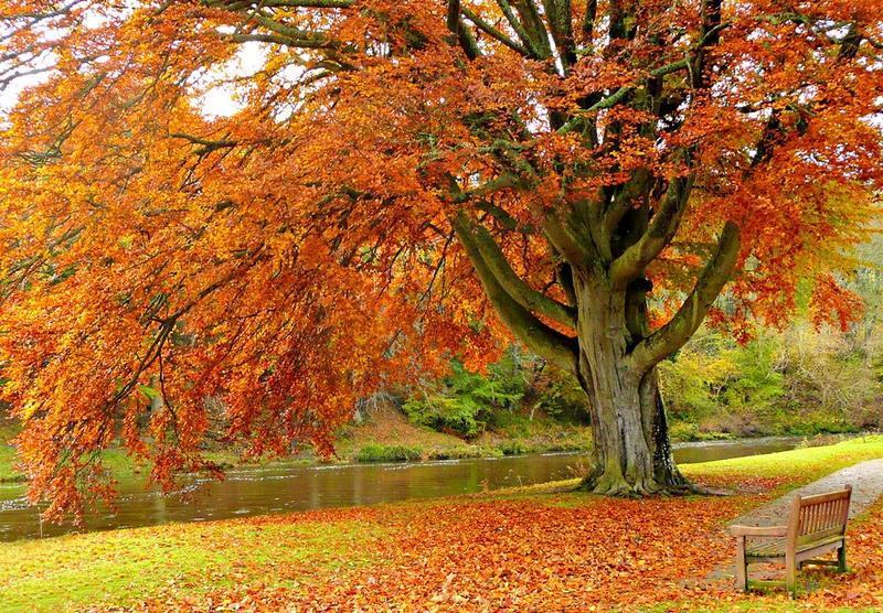 Краса жовтня. Пори року. Золота осінь Природа, Осінь, Жовтень, Дерева, Парк, Схід, Сонце, Вода, Листя, Небо id1863697763