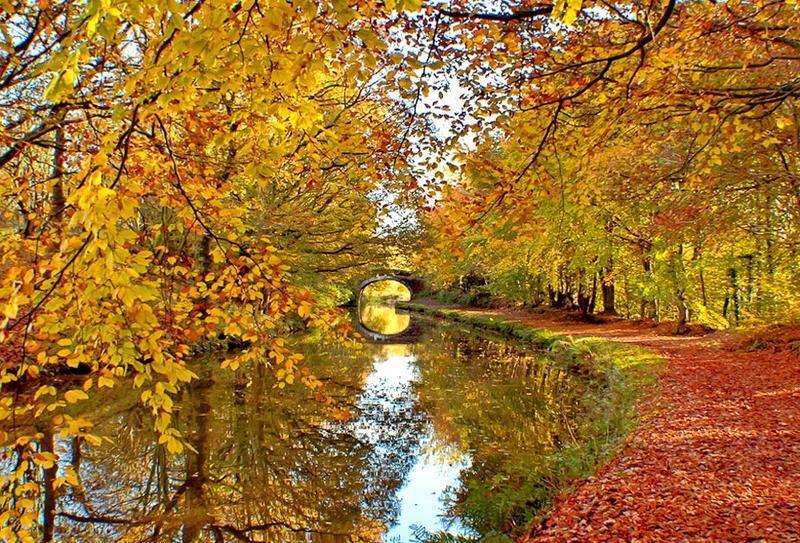 Краса жовтня. Пори року. Золота осінь Природа, Осінь, Жовтень, Дерева, Парк, Схід, Сонце, Вода, Листя, Небо id84659714