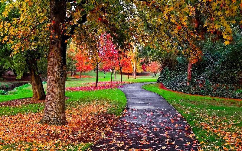 Краса жовтня. Пори року. Золота осінь Природа, Осінь, Жовтень, Дерева, Парк, Схід, Сонце, Вода, Листя, Небо id2082912501