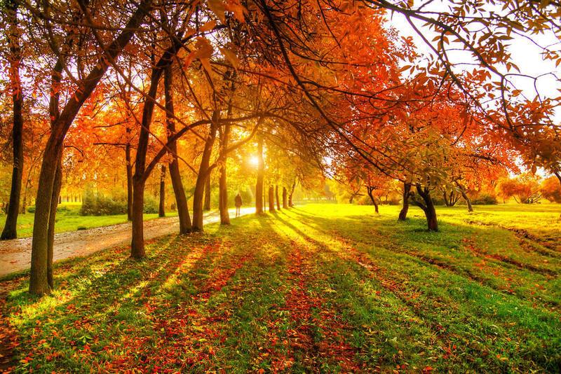 Краса жовтня. Пори року. Золота осінь Природа, Осінь, Жовтень, Дерева, Парк, Схід, Сонце, Вода, Листя, Небо id394563391