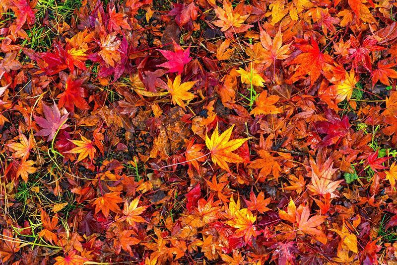 Краса жовтня. Пори року. Золота осінь Природа, Осінь, Жовтень, Дерева, Парк, Схід, Сонце, Вода, Листя, Небо id1558686036