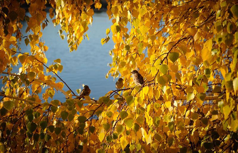 Краса жовтня - частина 14 Природа, Осінь, Жовтень, Дерева, Парк, Схід, Сонце, Вода, Листя, Небо id348800147