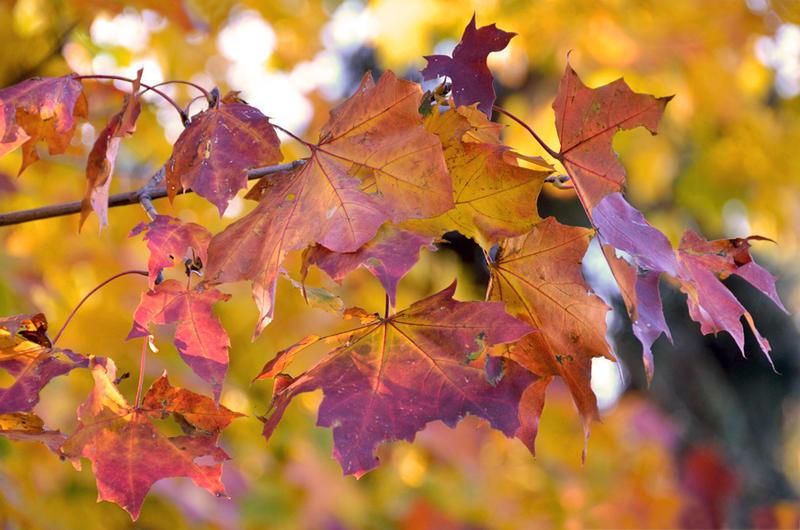 Краса жовтня - частина 14 Природа, Осінь, Жовтень, Дерева, Парк, Схід, Сонце, Вода, Листя, Небо id979778392