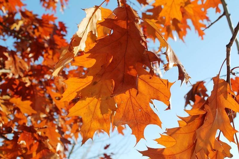 Краса жовтня - частина 14 Природа, Осінь, Жовтень, Дерева, Парк, Схід, Сонце, Вода, Листя, Небо id796560597