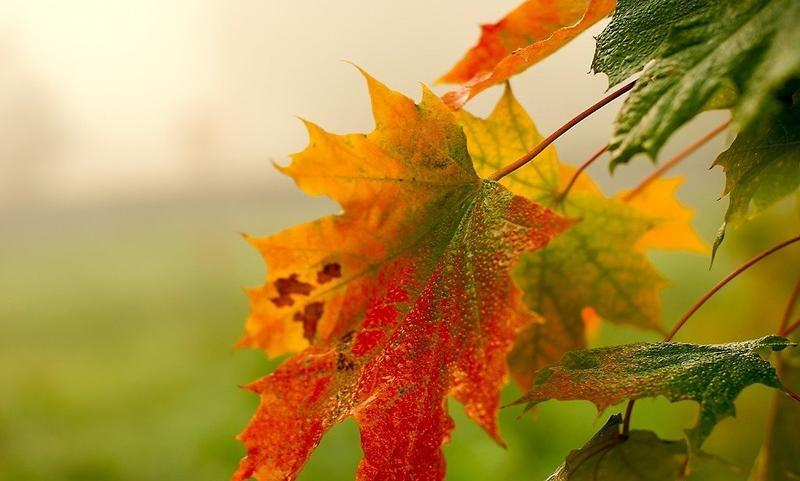 Краса жовтня - частина 14 Природа, Осінь, Жовтень, Дерева, Парк, Схід, Сонце, Вода, Листя, Небо id1281369347