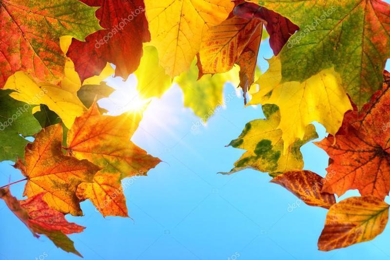 Краса жовтня - частина 15 Природа, Осінь, Жовтень, Дерева, Парк, Схід, Сонце, Вода, Листя, Небо id507391169