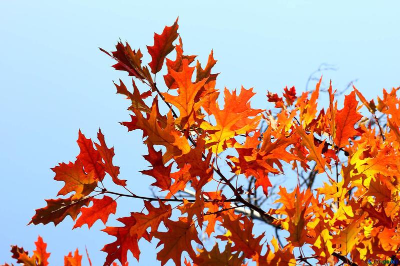 Краса жовтня - частина 15 Природа, Осінь, Жовтень, Дерева, Парк, Схід, Сонце, Вода, Листя, Небо id1432153629