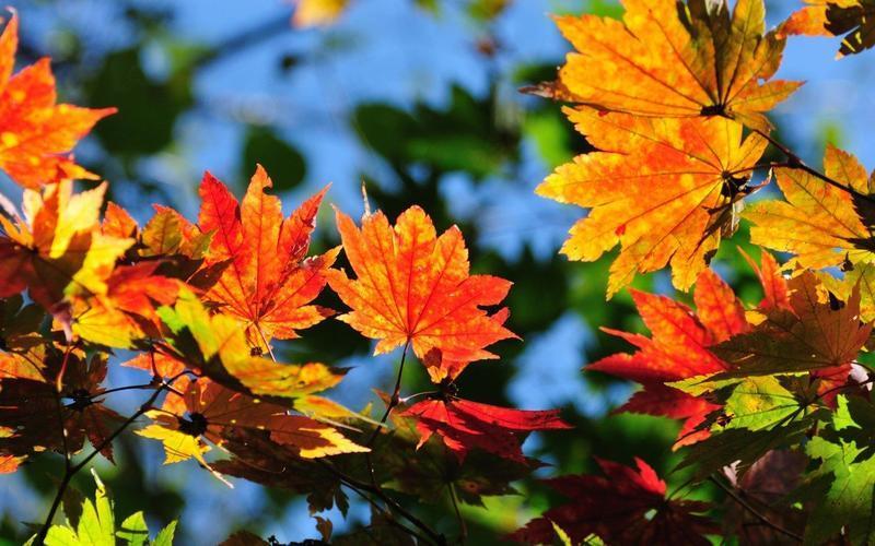 Краса жовтня - частина 15 Природа, Осінь, Жовтень, Дерева, Парк, Схід, Сонце, Вода, Листя, Небо id504909753